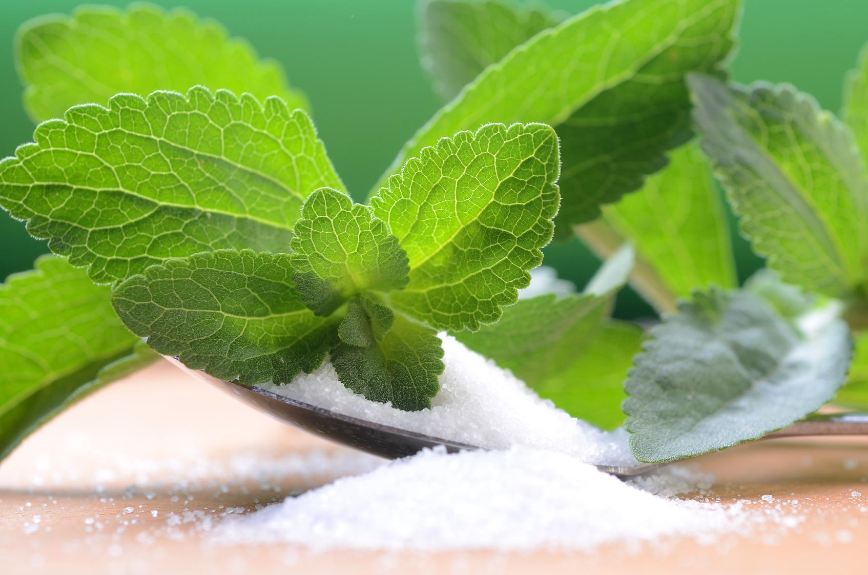 Stevia-ziołowy słodzik dla każdego
