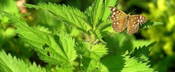 Leki roślinne a ciąża