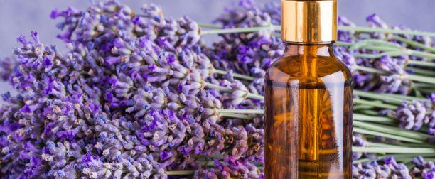 Lecznicze właściwości olejku lawendowego
