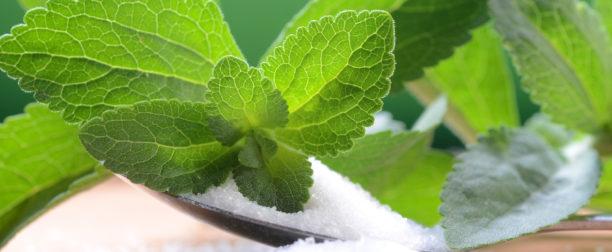 Stevia – ziołowy słodzik dla każdego