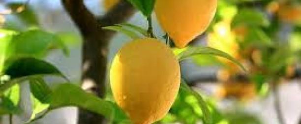 Zalety cytryny