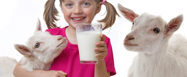 Regularne picie koziego mleka- jak wpływa na zdrowie i urodę?