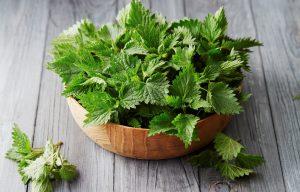 Pokrzywa – cudowne zielsko…(cz. 1 – liście)